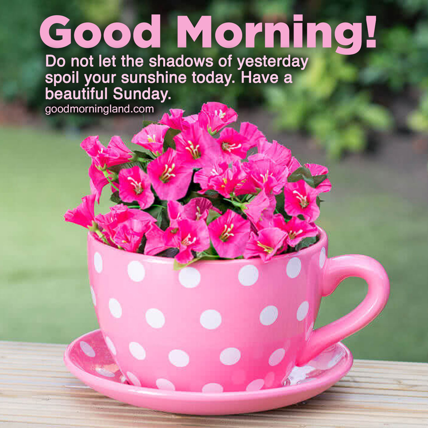 Lovely and Good morning Sunday morning images   Good Morning ...