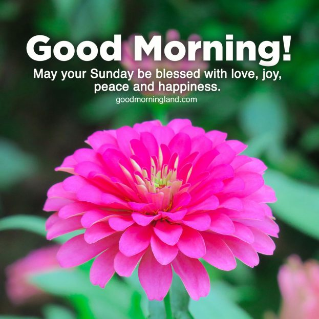Most Downloaded and Good morning Sunday morning images - Good Morning Images, Quotes, Wishes, Messages, greetings & eCard Images.