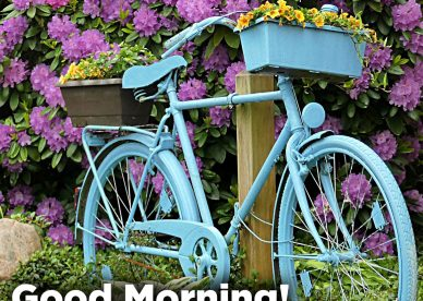 Recent collection of Good morning Sunday morning pics - Good Morning Images, Quotes, Wishes, Messages, greetings & eCard Images.