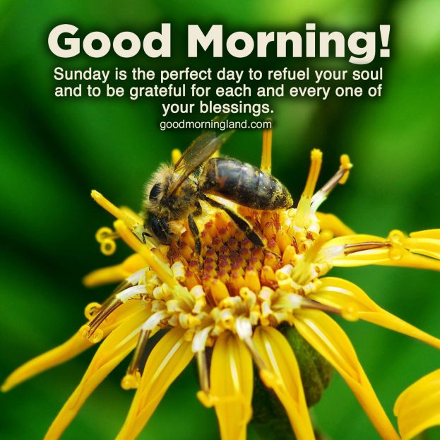 Top animated Good morning Sunday morning images - Good Morning Images, Quotes, Wishes, Messages, greetings & eCard Images.